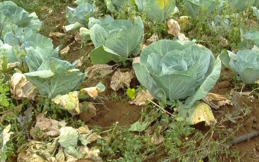 Protection et conservation des ressources végétales