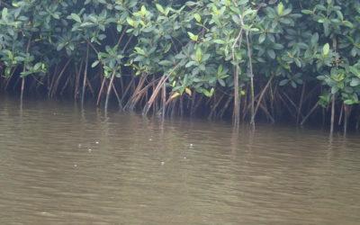 Management des écosystèmes aquatiques et limnologie