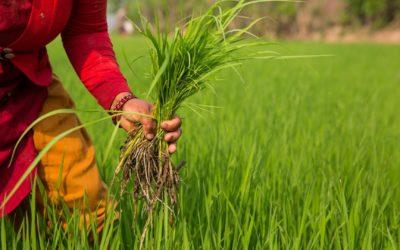 Agriculture durable et changements climatiques